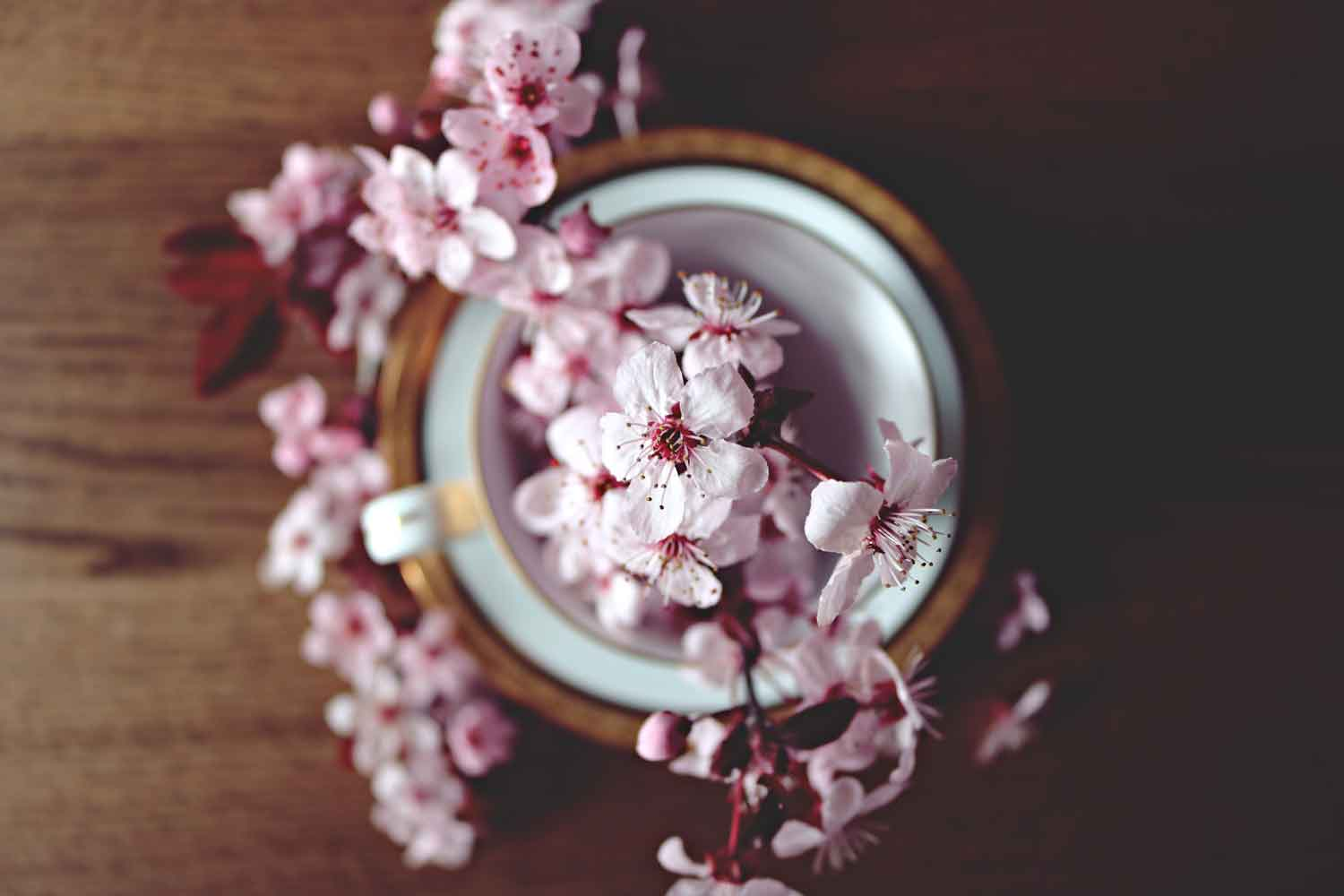 beautiful-bloom-blooming-blossom-371433_m